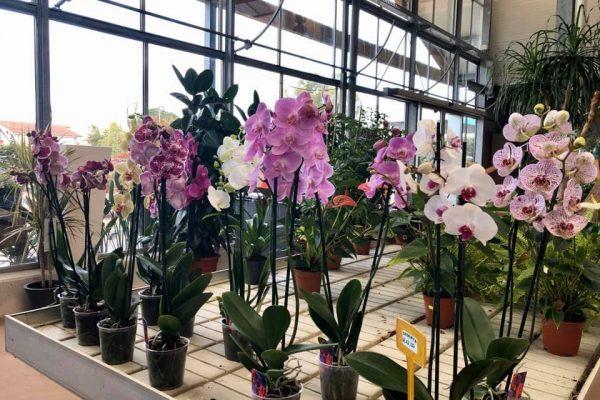 piante da interno 4
