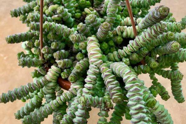 piante grasse 1